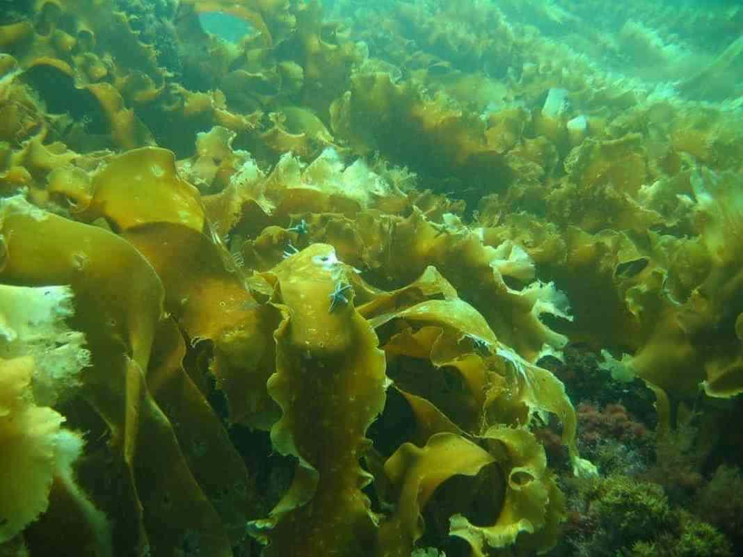 tảo nhật