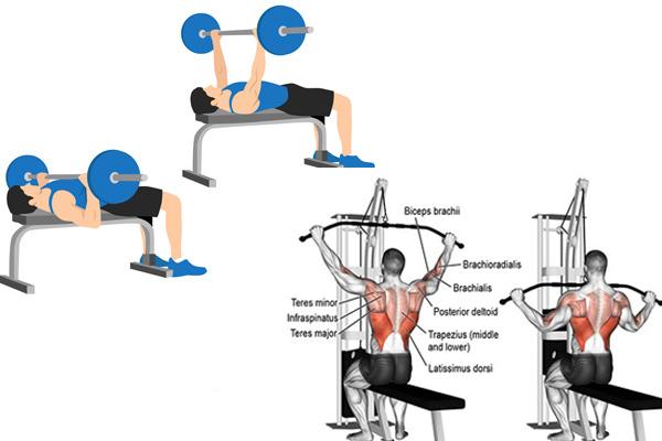 chương trình tập gym